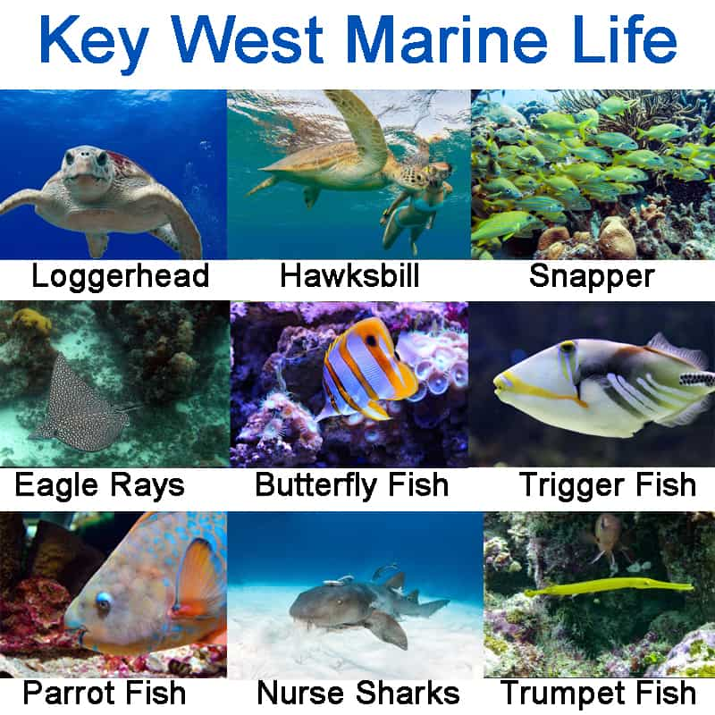 key west marine life pictures